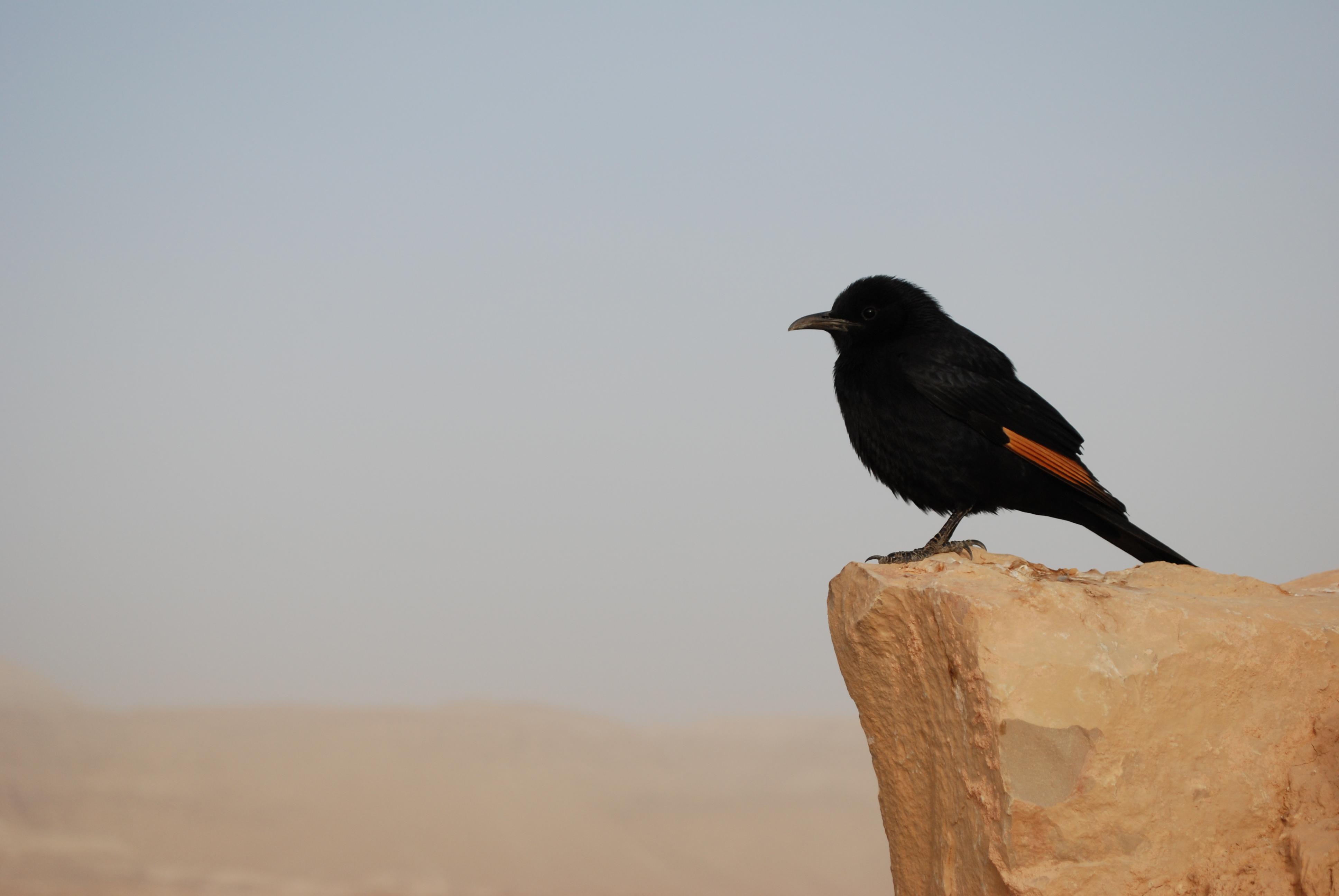 Pondering Bird