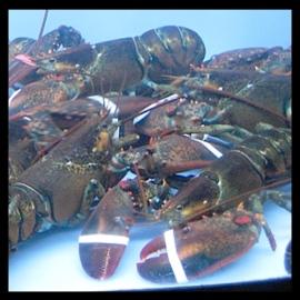 lobster_tank