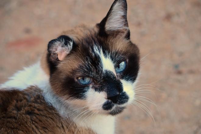 Headshot of my cat Chance